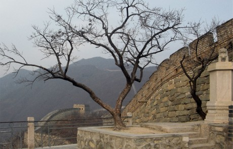 James Webb - There's no Place Called Home - Calls of a Golden-belied Flycatcher broadcast from a tree along the Great Wall of China